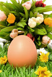 Egg and flowers. An egg on grass and flowers royalty free stock images