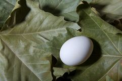 Egg and foliage Royalty Free Stock Photos