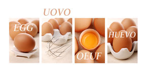 Egg in four languages Royalty Free Stock Images