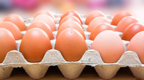Egg. Fresh eggs in egg carton Stock Photo