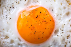 Egg. Fried egg. Chicken egg. Close up view of the fried egg on a frying pan. Salted and spiced fried egg Royalty Free Stock Photos