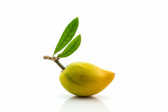 Egg fruit, Canistel, Yellow Sapote. Royalty Free Stock Images