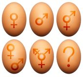 Egg gender. Eggs with gender symbols isolated on white Royalty Free Stock Photography