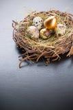 egg golden set Στοκ Εικόνες