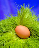 Egg in grass Royalty Free Stock Photo