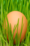 Egg on grass Stock Image