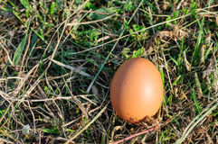Egg. An egg on grass areas Stock Image