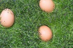 Egg on grass. Easter egg stock image