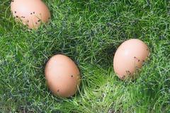 Egg on grass. Easter egg stock photography