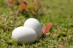 Egg on grass of easter concept Royalty Free Stock Image
