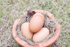 Egg on grass Stock Photography