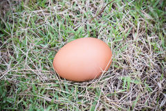 Egg on grass Royalty Free Stock Photography