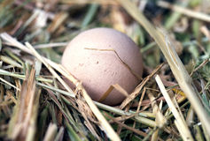Egg in Grass Stock Images
