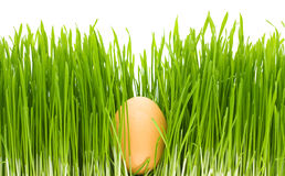Egg grass isolated Royalty Free Stock Photography