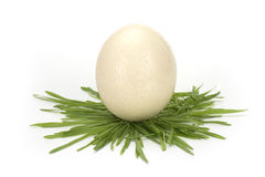 Egg with grass isolated on white background. White egg with grass isolated on the white background Royalty Free Stock Image