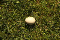 Egg in the grass Royalty Free Stock Photography