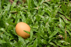 Egg On The Green Grass Royalty Free Stock Photo
