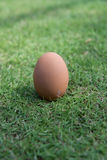 Egg in the green grass. Stock Image
