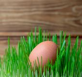 Egg in the green grass Easter fitness diet healthy diet stock images