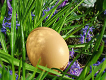 Egg on green grass and flowers Royalty Free Stock Photography