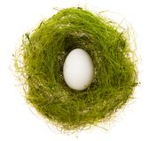 Egg in a green nest. White egg in a small nest from a green grass on a white background Stock Images