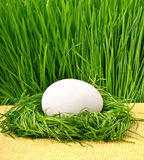 Egg in the green nest  Stock Images