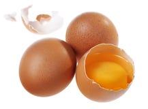 Egg group Royalty Free Stock Photo