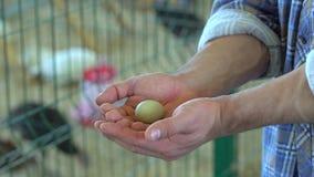 Egg in hand farmer man in poultry chicken farm turkey yard farm, hens in village farm hen eggs in man`s hands on. Egg in hand farmer man in poultry chicken farm stock video footage