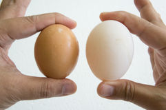 Egg hand hold one human thumb index concept Royalty Free Stock Photo