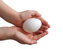 egg in the hands (isolated) stock images