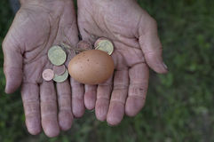 Egg In Hands Stock Images
