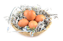 Egg. The harvesting of eggs in the morning Stock Photography