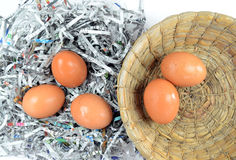 Egg. The harvesting of eggs in the morning Royalty Free Stock Photos
