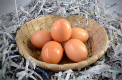 Egg. The harvesting of eggs in the morning Royalty Free Stock Photo