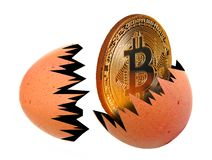 Egg hatchling bitcoincryptocurrency born hatched money cash nest. Concept photo of a gold bitcoin cryptocurrency hatchling being born emerging from nest egg stock images