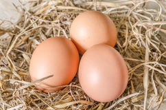 Egg in hay nest Royalty Free Stock Photos