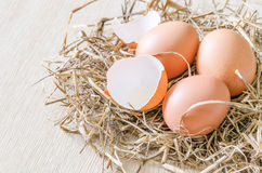 Egg in hay nest Royalty Free Stock Image