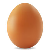 Egg - Illustration. Vector illustration of brown chicken eggs on a white background closeup Royalty Free Stock Photos
