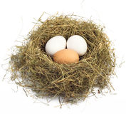 Egg In Nest Royalty Free Stock Photos