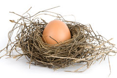 Free Egg In Nest Royalty Free Stock Images - 9975929