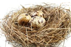 Free Egg In Real Nest Royalty Free Stock Images - 10425669