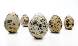 在一个空白背景的鹌鹑egg.isolated 库存图片