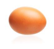 Egg isolated Stock Image