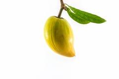 Egg la fruta, Canistel, Sapote amarillo (campechiana del Pouteria (Kunth) Imagen de archivo