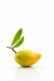 Egg la fruta en el fondo blanco, Canistel, Sapote amarillo Foto de archivo libre de regalías