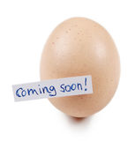 Egg with label. An egg which is symbolic for upcoming novelty. Can be used to illustrate anything new Royalty Free Stock Photography