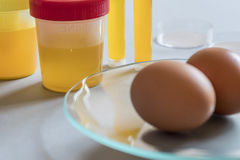 Egg in laboratory infected with Fipronil. Spain Stock Image
