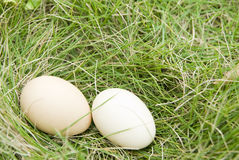 The egg  on lawn Stock Photography