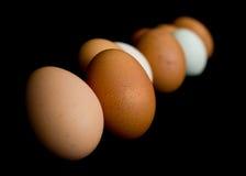Egg line-up 2. Farm fresh eggs arranged in a row stock image