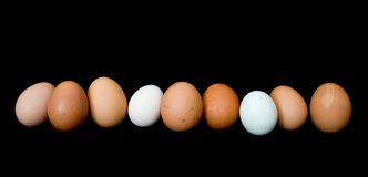 Egg line-up. Farm fresh eggs arranged in a row Royalty Free Stock Images